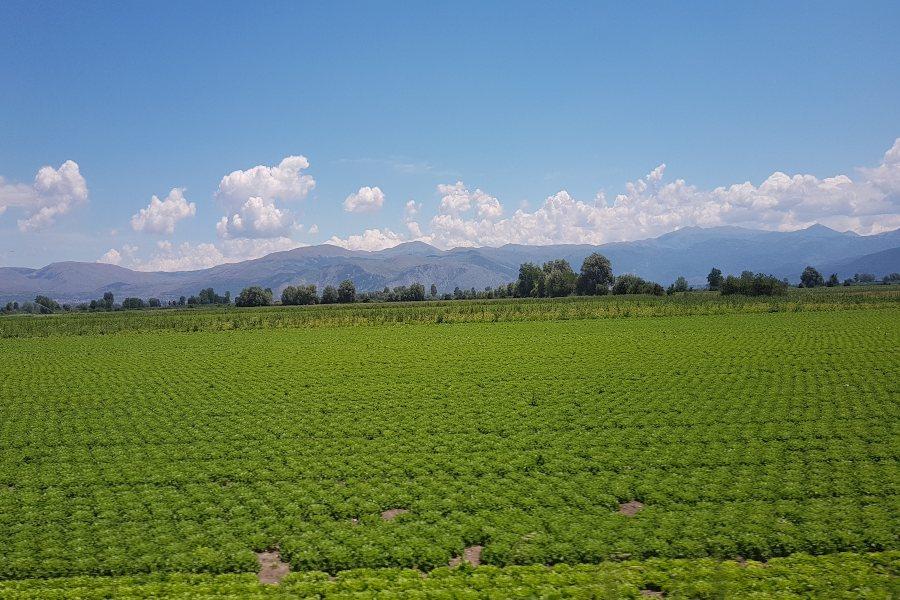 Abruzzo in camper la Piana del Fucino le coltivazioni