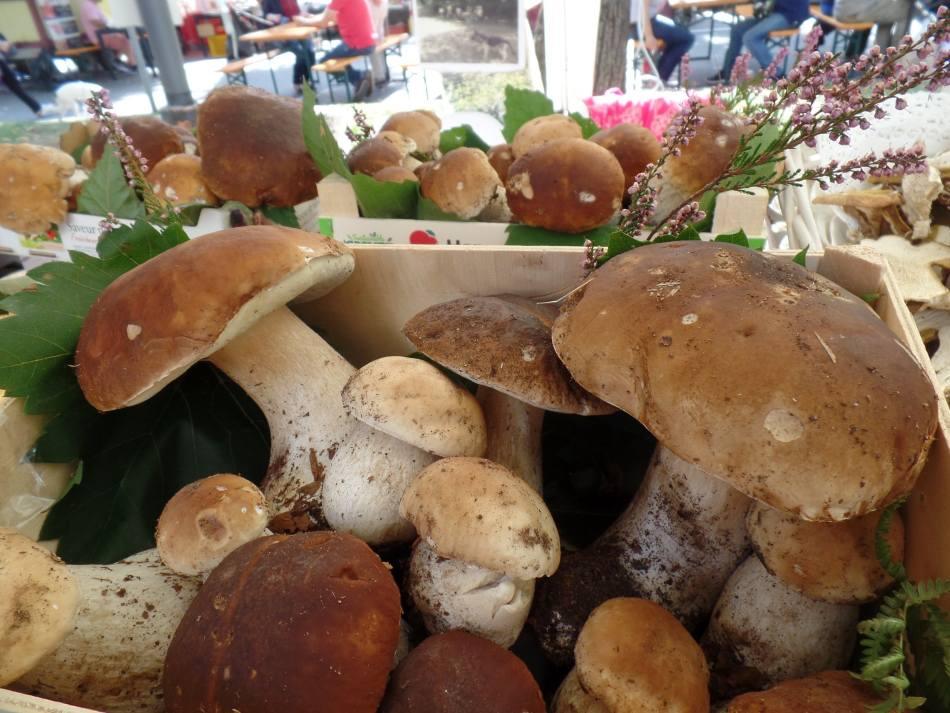 Alla scoperta di un borgo in camper - Funghi