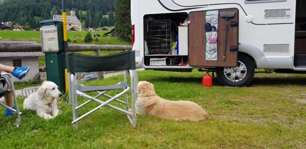 Cani in campeggio all'aperto