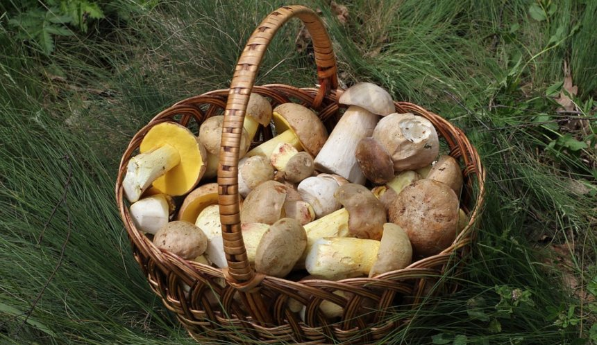 Ricette da camper funghi