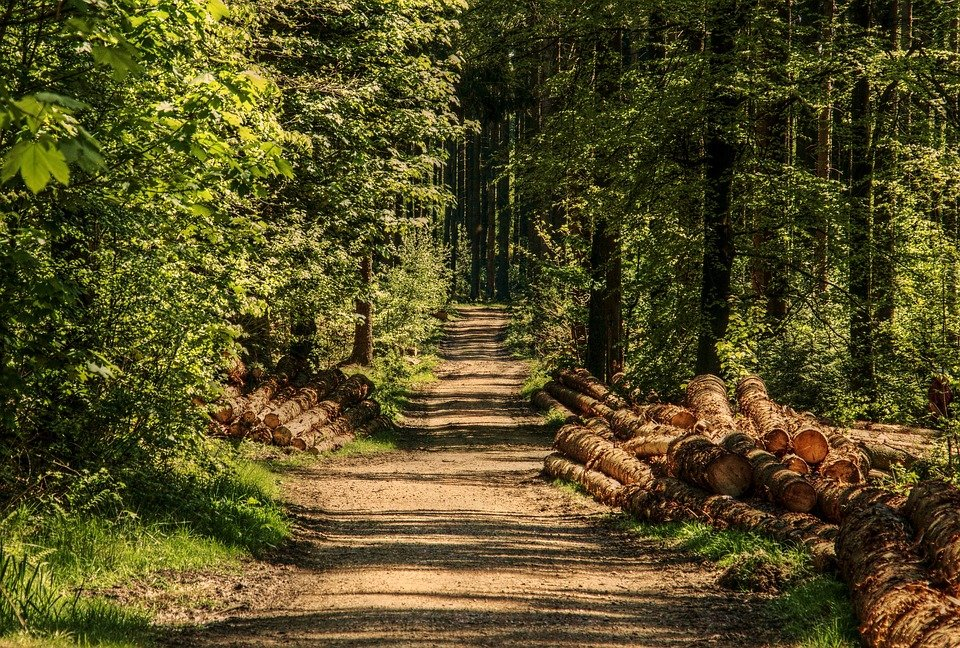 bosco per escursioni