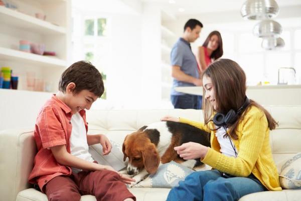 Il cane che gioca in famiglia