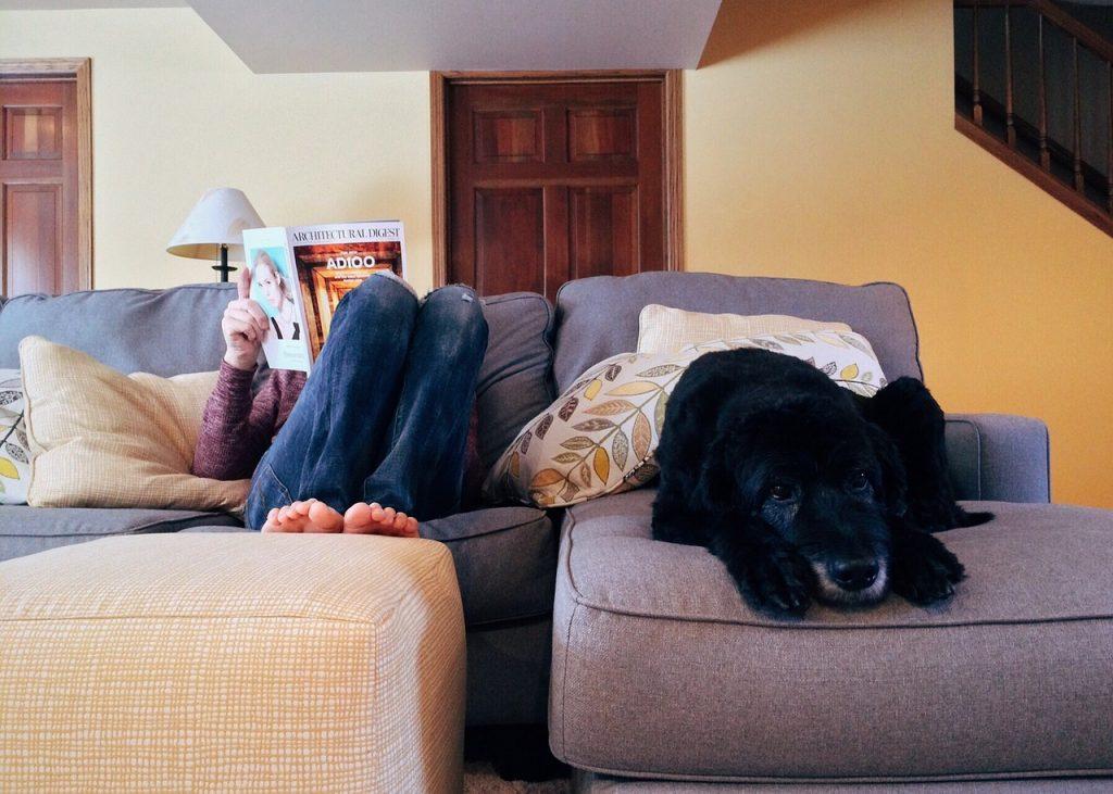 in casa con i cani