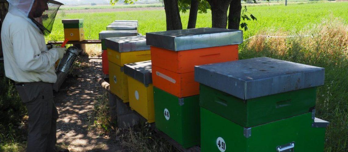 Gli apiari