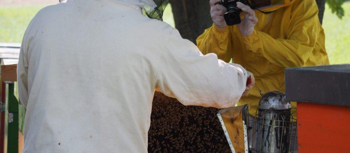 Il miele - la nostra esperienza