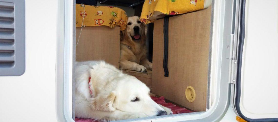 cani in camper