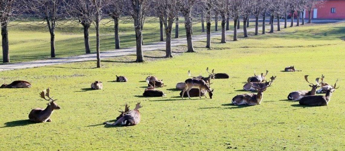 parco monte fuso cervi