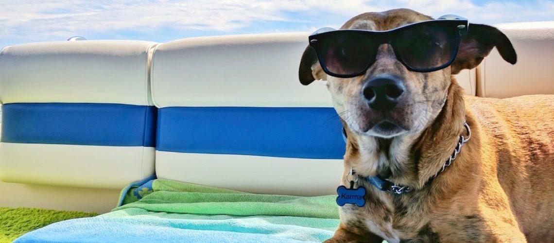 viaggiare in camper con il cane
