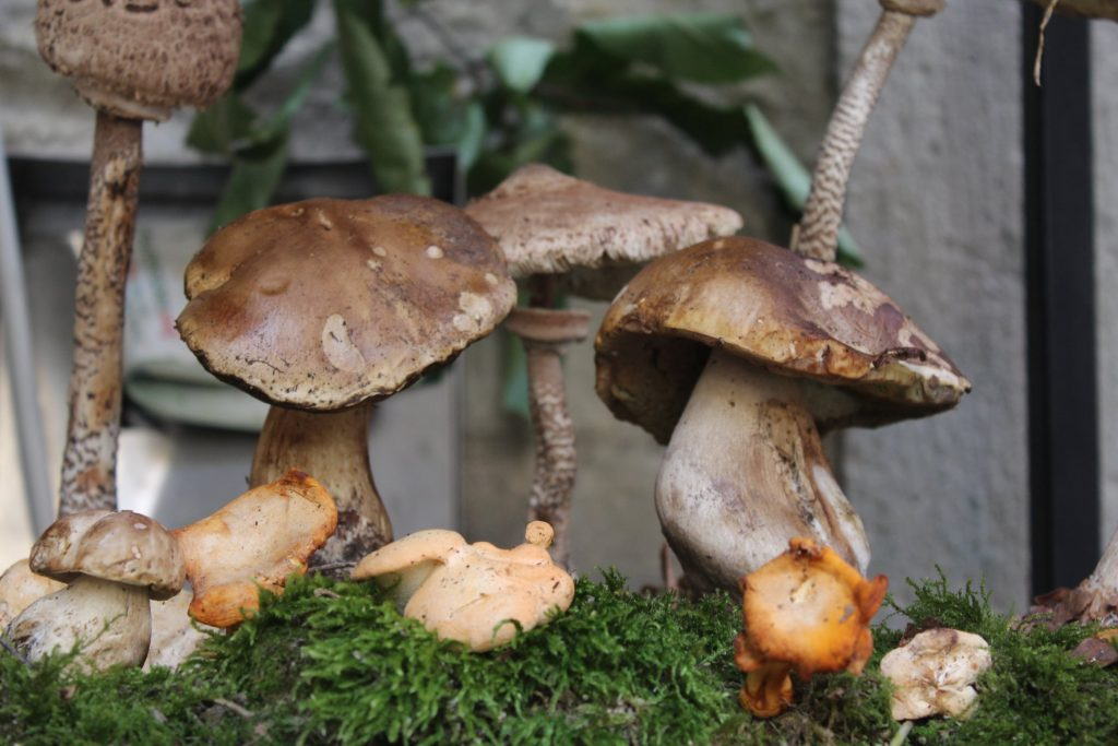 fiera del fungo di borgotaro