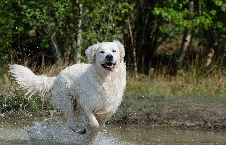 il cane al bagno