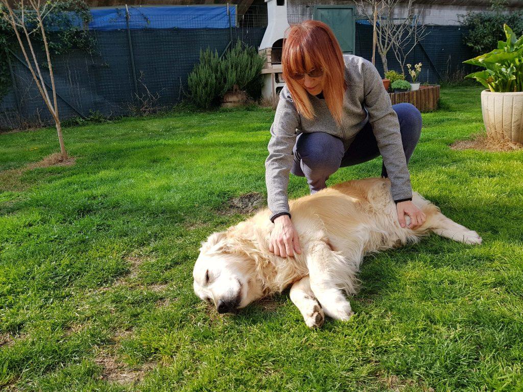 massaggio cani