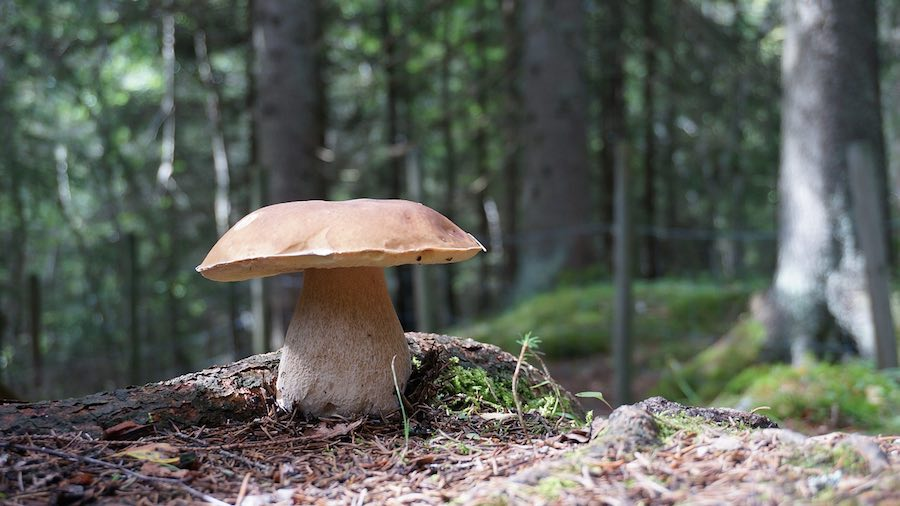 funghi e sottobsco